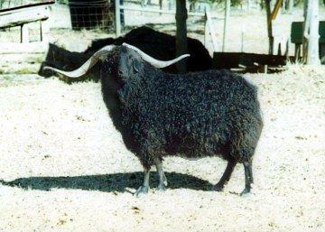 natural black mohair
