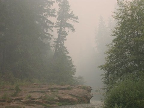 smoke filled ancient forest of the Umpqua