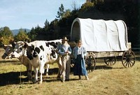 Ox wagon at the historical society